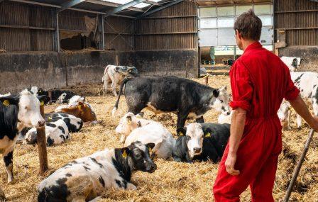 Eerlijk vlees direct van de boer: het vleespakket van Boer Joep!