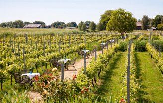 Pop-up terras tussen de wijnranken op steenworp afstand van Amsterdam